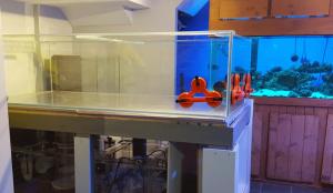 1000 pounds fish-tank test